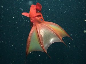 Watch out for the Vampire Squid...